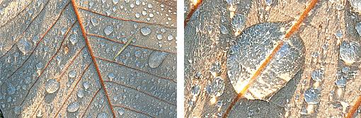 Рис. 6. Пример работы PhotoZoom Professional